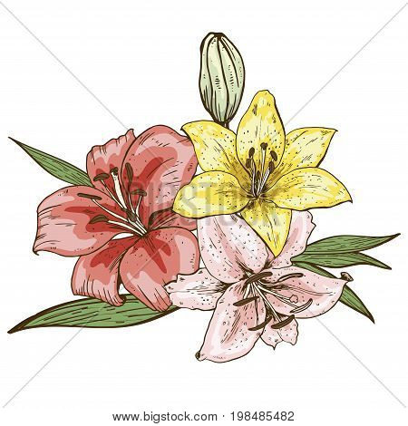 Bouquet of three colorfull lily flowers hand drawn isolated on white background.