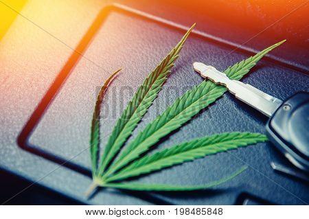 Green cannabis leaf, marijuana for cigarettes lies on a dark background with car keys. Concept transportation, dealership, transportation of drugs, hemp and leaves.