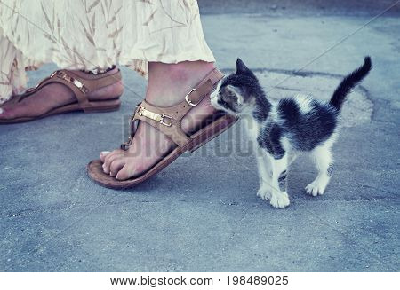 Little kitten is trying to reach woman's leg. Small cute pretty colorful cat is playing with lady wearing long skirt and espadrilles. Small animal in a big world.