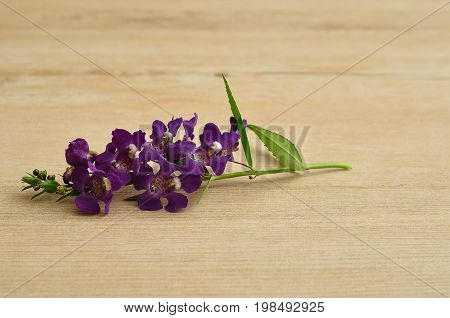 Small purple flowers on a wooden background