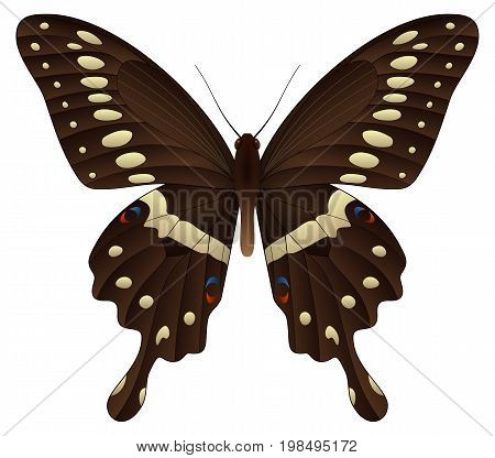 Papilio thoas or the king swallowtail isolated on a white background. Vector 3D illustration