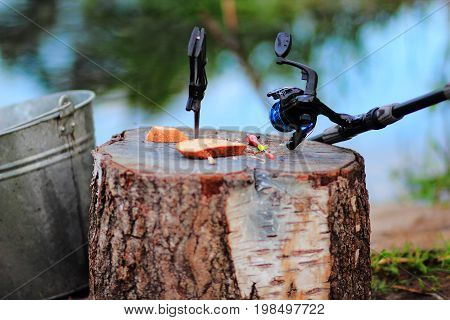 bait and fishing tackle in a stump.summer fishing