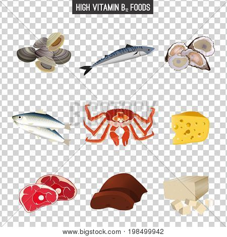 High vitamin B12 Foods. Healthy seafood, meat, liver, fish, crab, cottage cheese,  tofu and oysters. Vector illustration isolated on a transparent background.