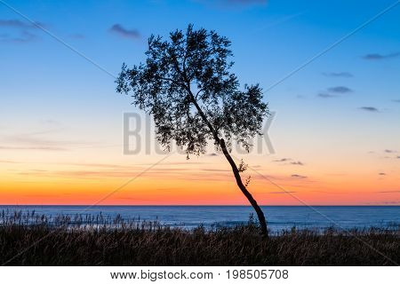 Inclined tree in front of the Baltic sea at sunset in Latvia