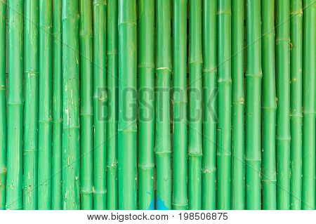 Abstract Background Of Green Chinese Bamboo