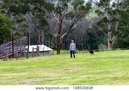 Woman walking her dog on a farm in Australia crossing a paddock towards distant buildings and eucalyptus trees in New South Wales