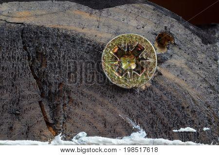 Screw Head on Dirty Dark Painted Wood Surface. Macro Snapshot