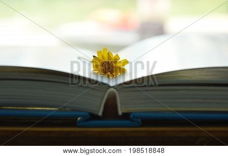 marigold yellow tropical flower on book pages