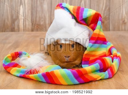 Funny guinea pig wearing a long multicolored hat (on a wooden background)