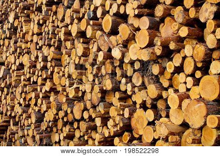 A pile of logs in a forest