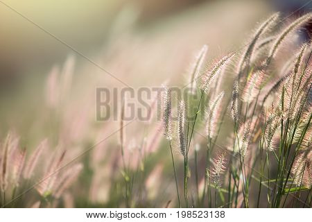 Flower grass in the windy day .