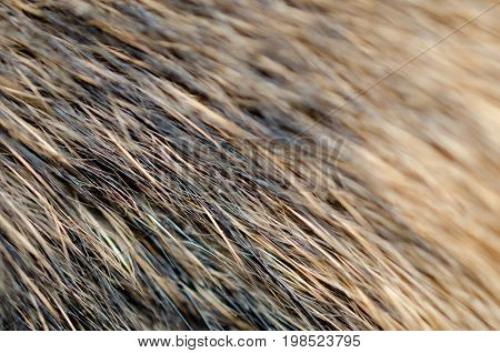 Animal fur texture as an abstract background (shallow DOF selective focus)