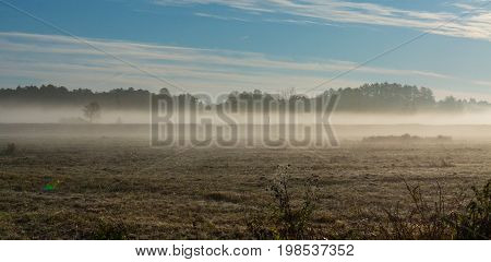 Early morning with mist over frosty meadow, Bialowieza Forest, Poland, Europe