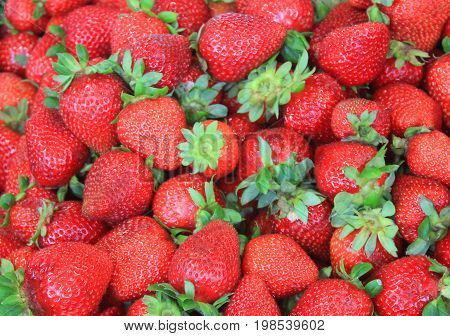 Fresh ripe strawberries background top view. Harvest of fruits scattered in local farmers market box. Isolated healthy, sweet red berry with green leaves, full frame image with no other elements.