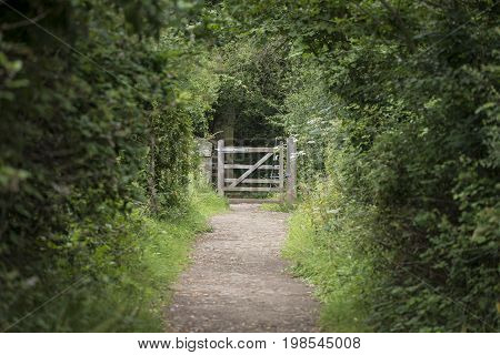 Shallow Depth Of Field Landscape Image Of Tree Covered Path Leading To Distant Gate