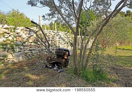 Motocultivator under the olive tree after the work