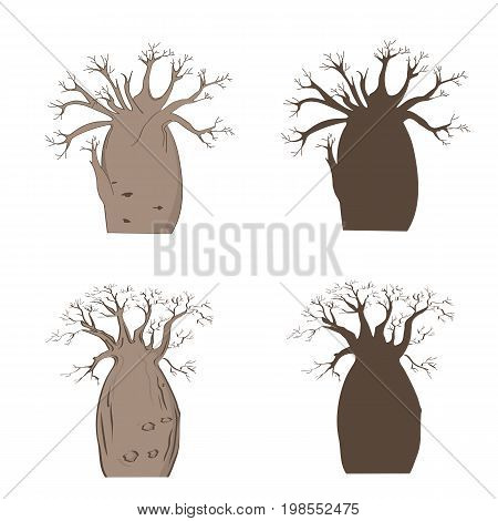 African iconic tree. Vector baobab set. Adansonia gregorii silhouette. Baobab in dry season illustration