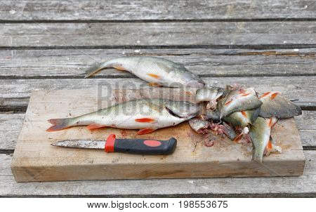 Perch fish fish offal and a knife laying on a bridge
