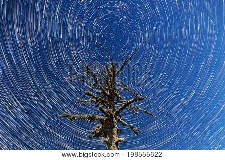 Milky Way. Falling Stars. Dead Tree Timelapse