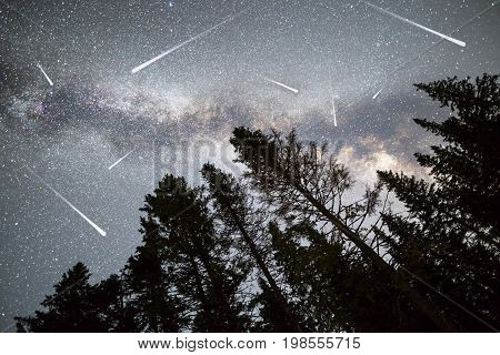 Pine Trees Silhouette Milky Way Falling Stars