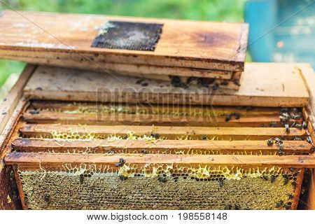 Wax Frames With Honey In The Hive, Process Of Obtaining Honey