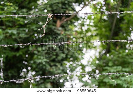 barbed wire in front of forest with trees in the back