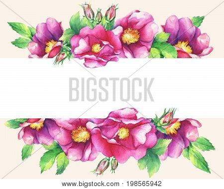 Banner with flowering pink roses (names: dog rose, rosa canina, Japanese rose, Rosa rugosa, sweet briar, eglantine), isolated on peach background. Watercolor hand drawn painting illustration.