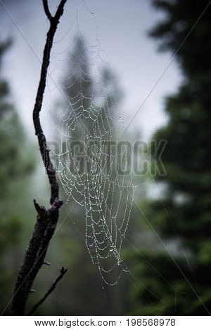 A spider web in the mountains resists a rainstorm