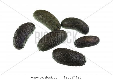Seedless avocado Persea americana is a green skinned fleshy body fruit with an elongated shape and without any seed.