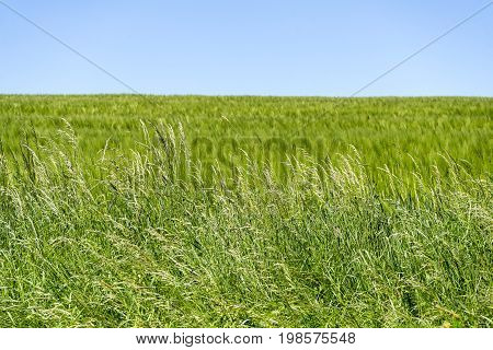 sunny grassland scenery in Hohenlohe a area in Southern Germany