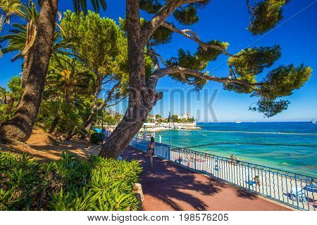 Beach Promenade In The Beaulieu-sur-mer Village With Palm Trees, Pine Trees And Azure Clear Water