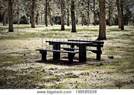 Black Bench In The Forest