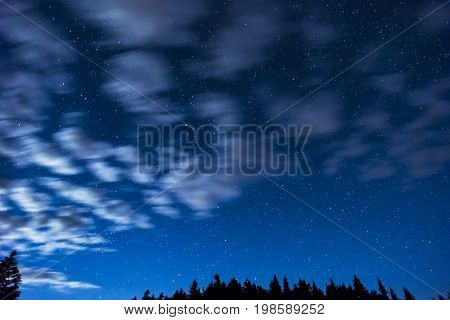 Silhouetted Pine Trees Along Beneath Bright Night Sky Full Of Stars, Wispy Clouds