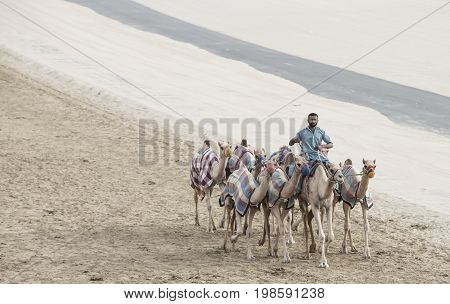 Rub al Khali Desert Abu Dhabi United Arab Emirates July 22nd 2017: men training camels at a camel track in a desert