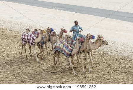 Rub al Khali Desert Abu Dhabi United Arab Emirates July 22nd 2017: man training camels at a camel track in a desert