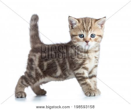 Young cat side view looking directly to camera isolated on white