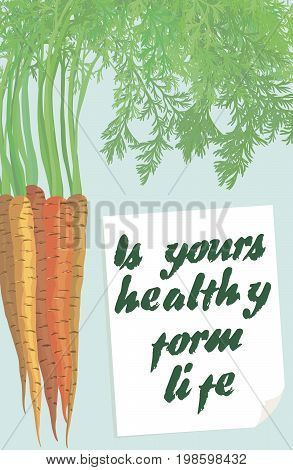 Sweet carrots. New crop. Colored vector illustration