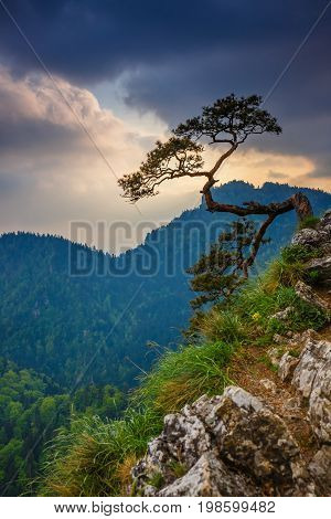 Sokolica Peak In Pieniny Mountains With A Famous Pine At The Top, Poland