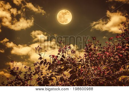 Flowers Blooming Against Night Sky And Clouds With Bright Full Moon. Sepia Tone.