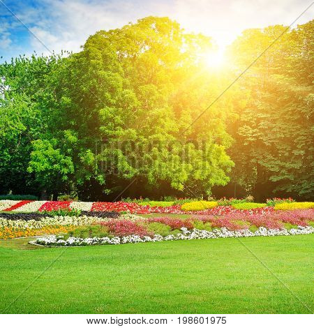 summer park with beautiful flower beds and sun