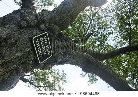 An old apple tree with a do not climb sign hanging from it at Topsmead State Forest in Litchfield Connecticut.