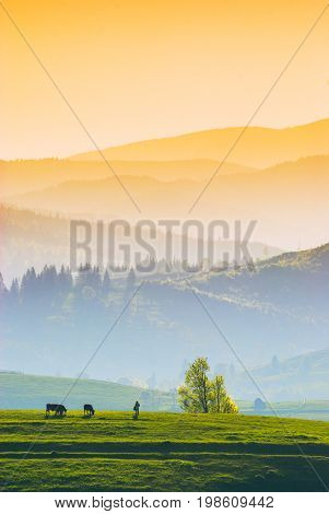 Herdsman With Cow On A Green Meadow