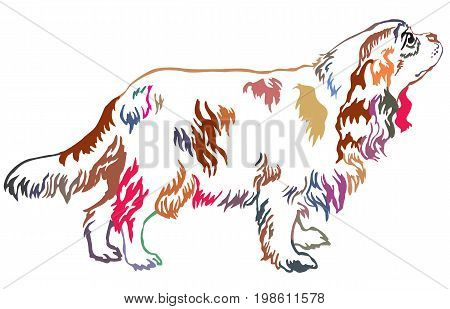 Colorful decorative portrait of standing in profile dog Cavalier King Charles Spaniel vector isolated illustration on white background