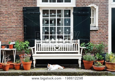 Amsterdam Holland Europe - nice view of a building facade a window a white bench and a cat