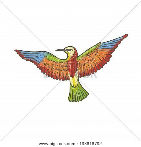 Vector colorful textured sketch drawn by hand of European bee-eater on a white background. Bright exotic migrating bird. Isolated outline illustration