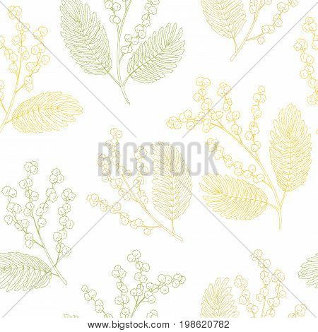Mimosa graphic color sketch seamless pattern illustration vector