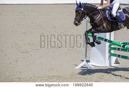 Black dressage horse and woman in white uniform performing jump at show jumping competition. Equestrian sport background. Crow black horse portrait during dressage competition. Copy space.