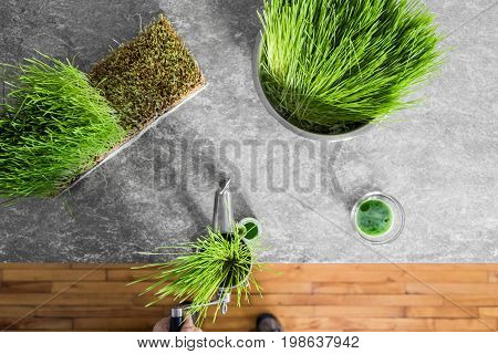 Top View Of Wheatgrass Extraction In Action On The Kitchen Countertop Using A Manual Juicer