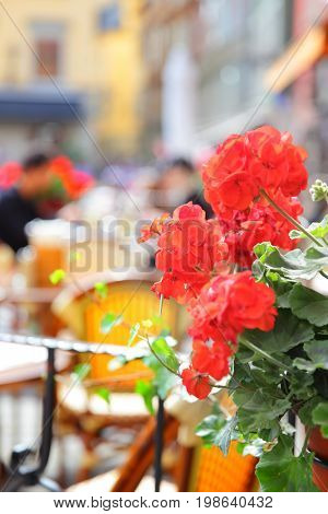Open terrace of restaurant in Stockholm, Sweden. Focus on the geranium flowers