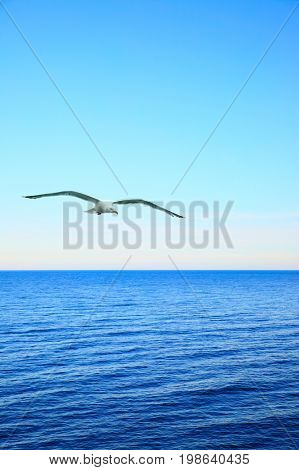 Beautiful seascape with soaring sea-gull